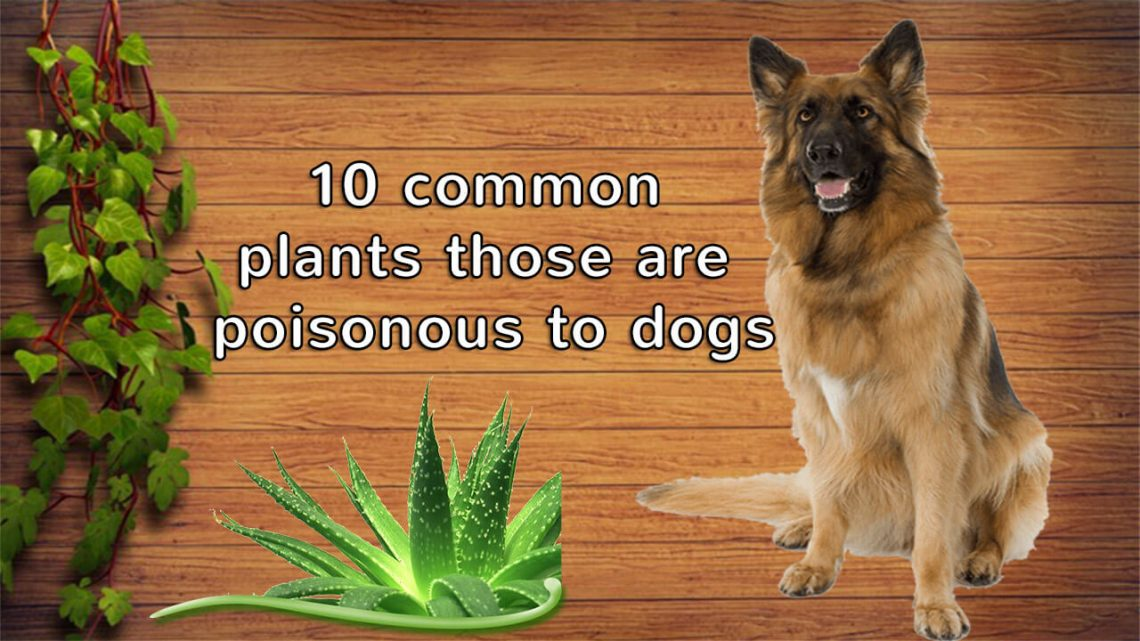 poisonous plants to dogs
