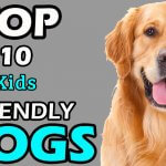 TOP 10 KIDS FRIENDLY DOG BREEDS