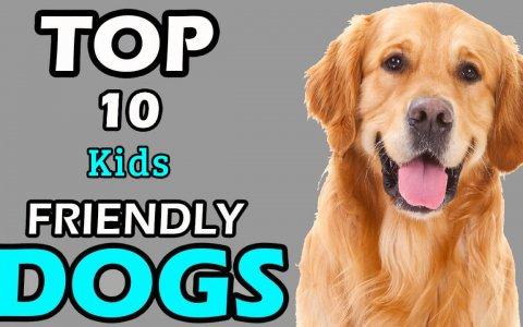 KIDS FRIENDLY DOGS
