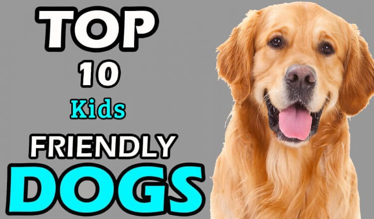 KIDS FRIENDLY DOGS