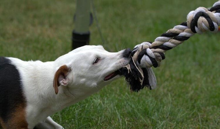 Preventing dealing dog bites