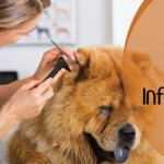 Dog Ear Infection – Causes, Symptoms, and Effective Home Remedies