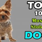 Top 10 Most Stolen dog breeds