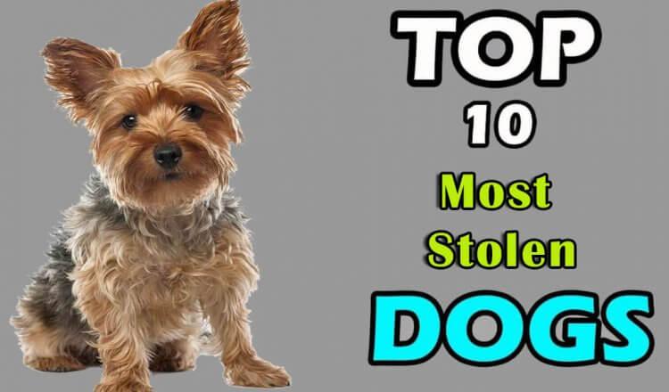 Stolen dog breeds