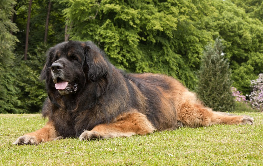 Masculine Names For Big Dogs