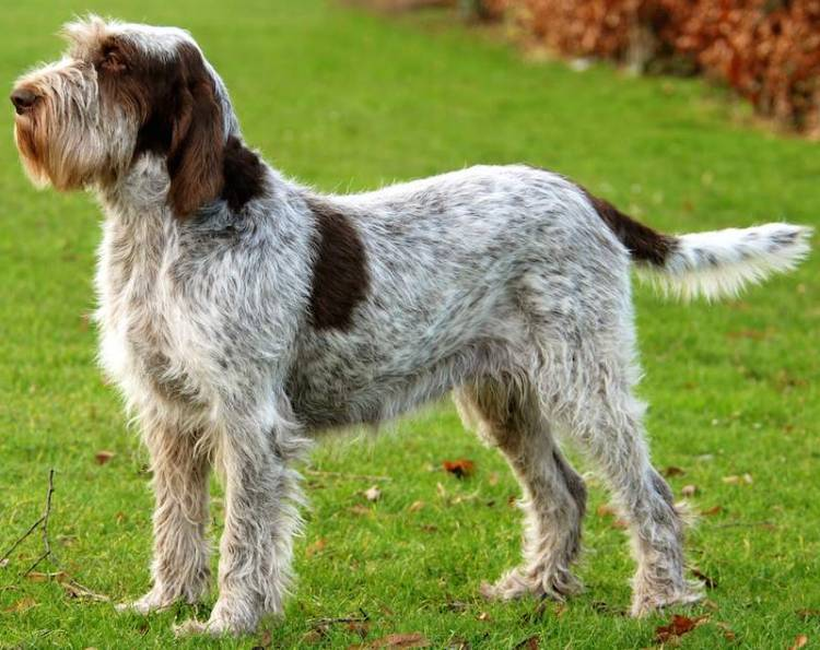 Pros And Cons Of Various Dog Breeds