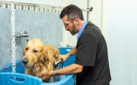 grooming and bathing your dog
