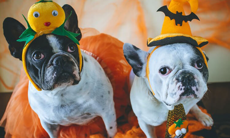 Pros and cons of dressing up your dog