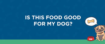 is this food good for my dog