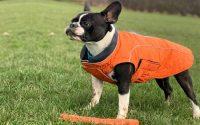 Frenchton dog photo