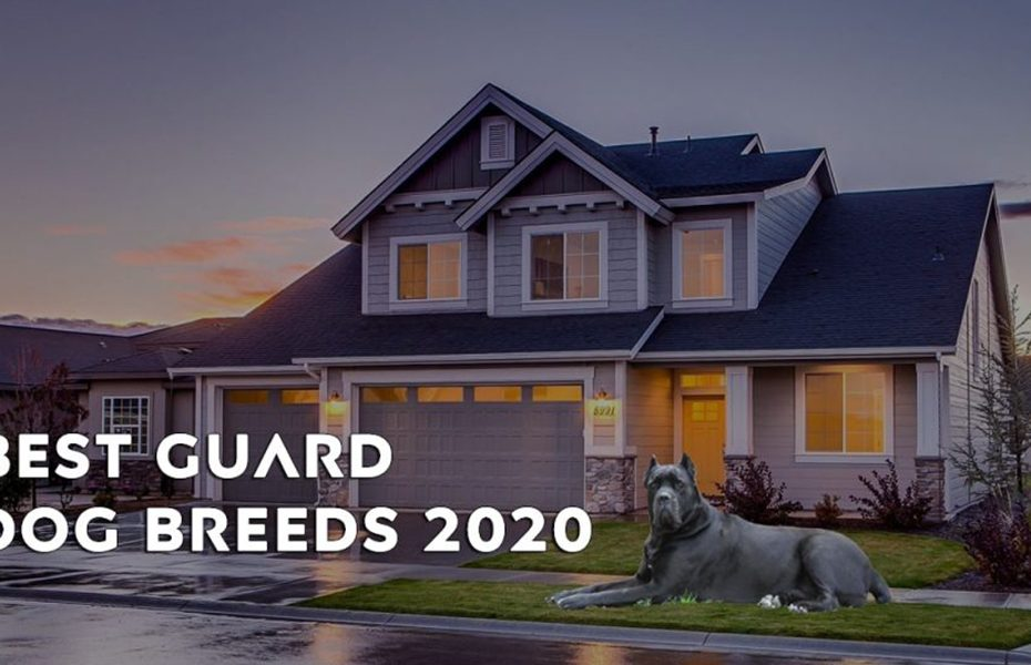 Best Guard Dog Breeds 2020