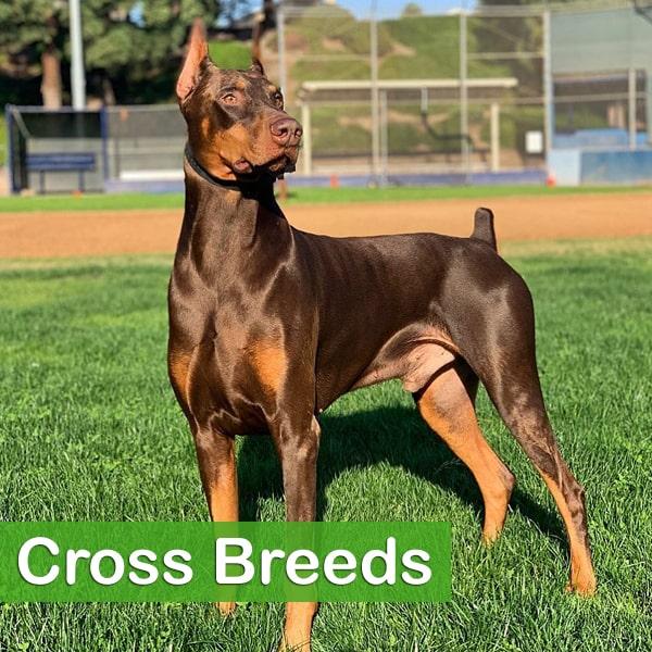 Cross Breeds