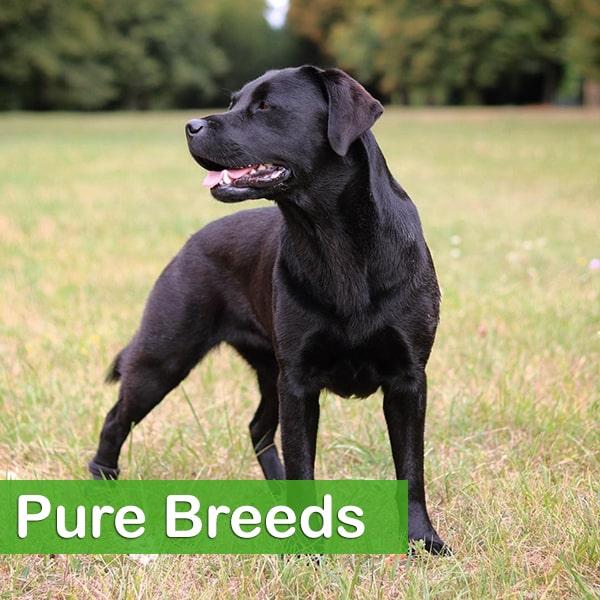Pure breeds
