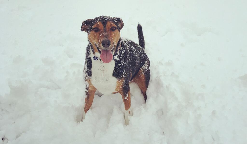 beagleman-pic-4