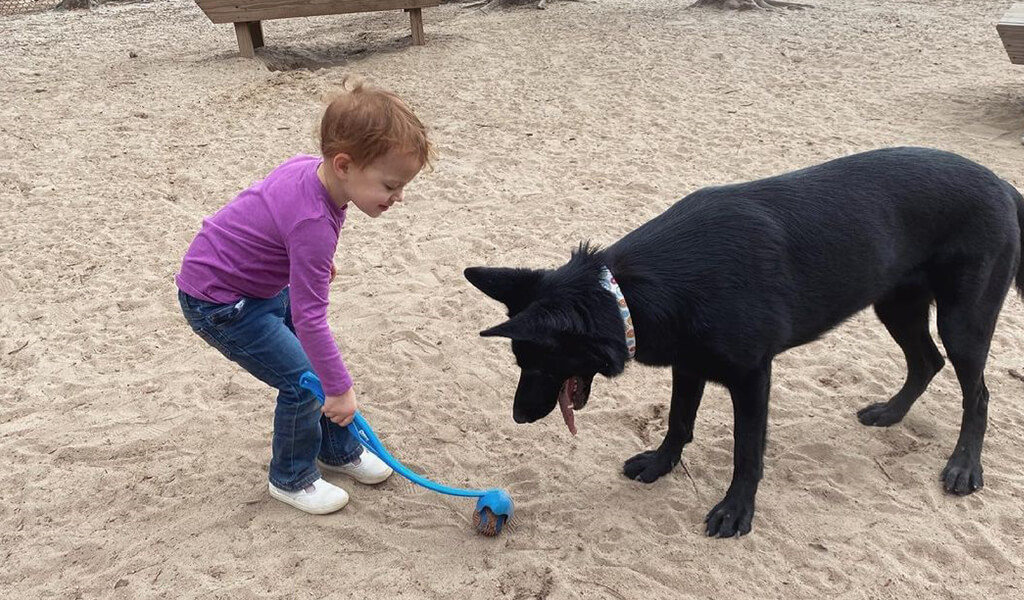 black gsd playing with kid