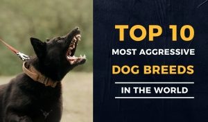 Top 10 Most Aggressive Dog Breeds In The World