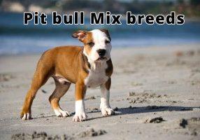 Pit bull Mix breeds
