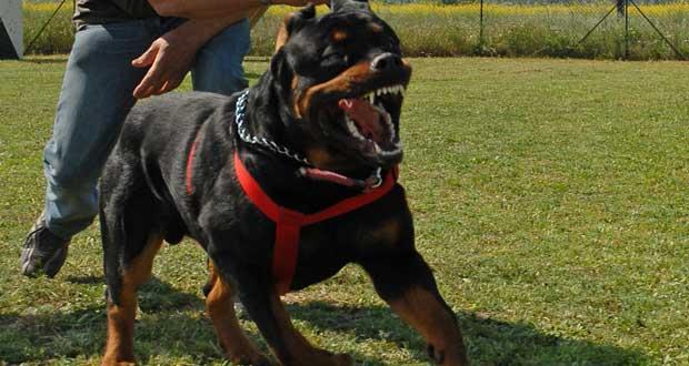 Resident Evil Dog Breed