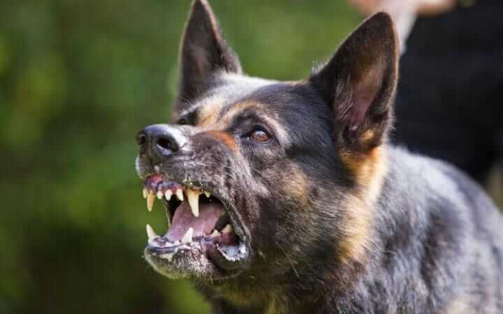 How To Correct Dog Barking