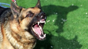Snarling dog Photos